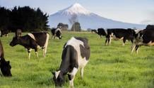 """""""草饲奶粉""""爆款来临,高培这款奶粉把产品卖点挖掘的淋漓尽致"""