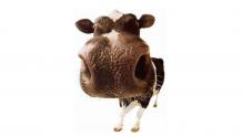 从认养一头牛浅析网红乳品下沉之路
