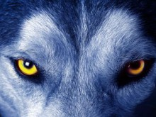 """狼来了,美团布局母婴的""""阴谋"""""""