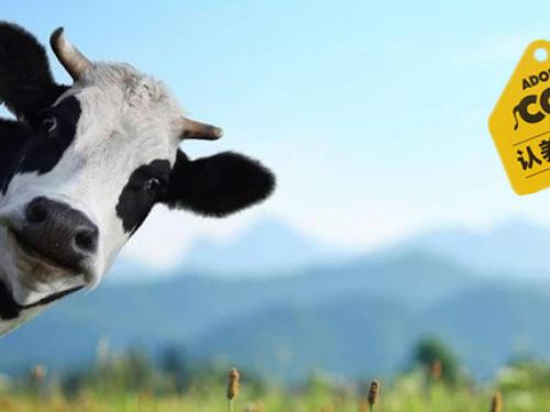 """""""认养一头牛""""要上市,是资本和营销的""""造梦""""节?"""
